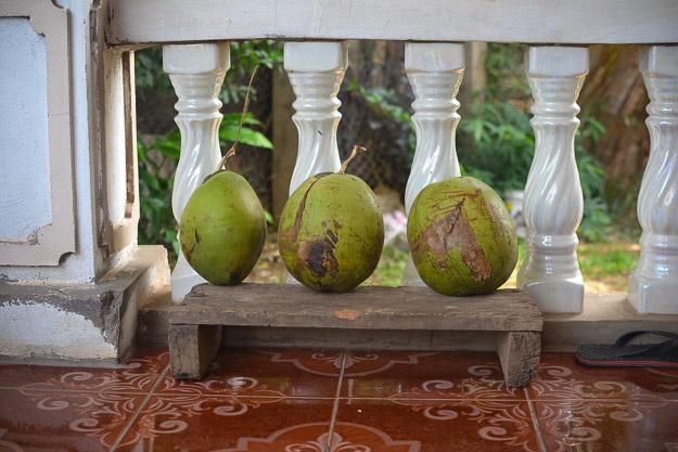 09-21-2014 Coconuts by Melissa Crossett-4