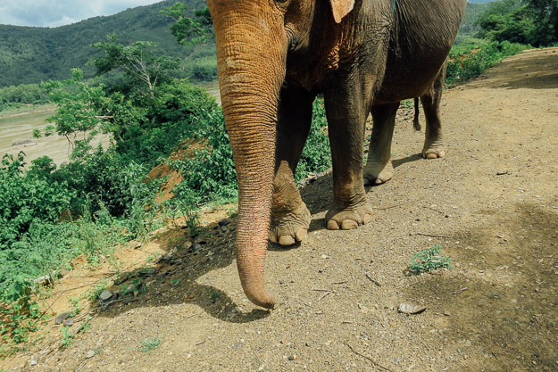 2015-09-21 elephant riding with kids in Luang Prabang by Melissa Crossett (2 of 25)