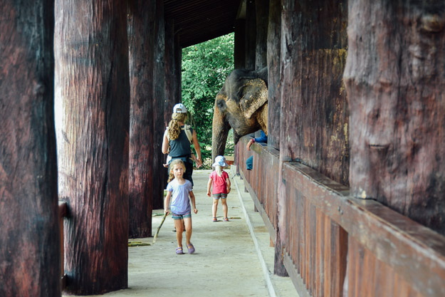 2015-09-21 elephant riding with kids in Luang Prabang by Melissa Crossett (25 of 25)